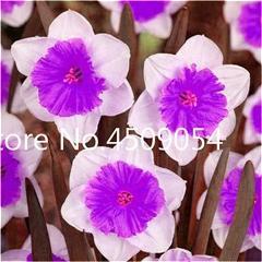 200 pcs flower daffodil,daffodil flores(not daffodil bulbs)bonsai flower plantas aquatic plants double petals Narcissus garden